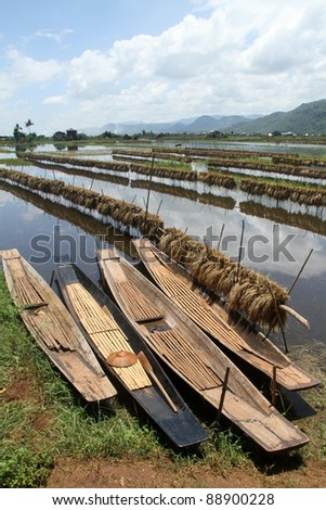 Rice field and boats on the Inle lake, Myanmar