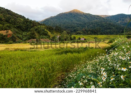 Rice field and mountain landscape - stock photo