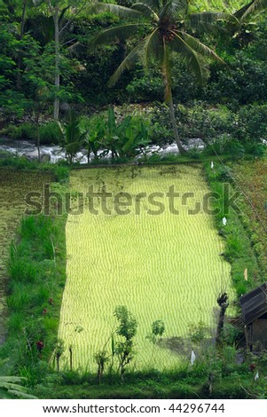 Rice field and mountain river, Bali, Indonesia