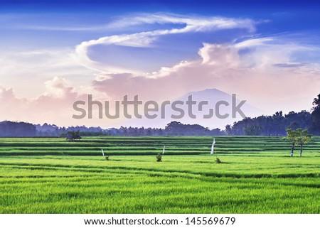 Rice field and volcano on sunrise, Bali - stock photo