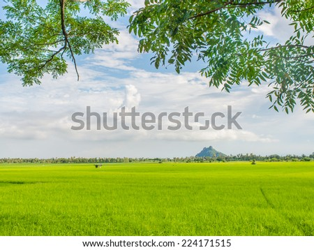 rice field behind the factory with green leaf s frame.