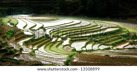 Rice field curves - stock photo