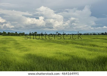rice field from Chiang mai northern thailand