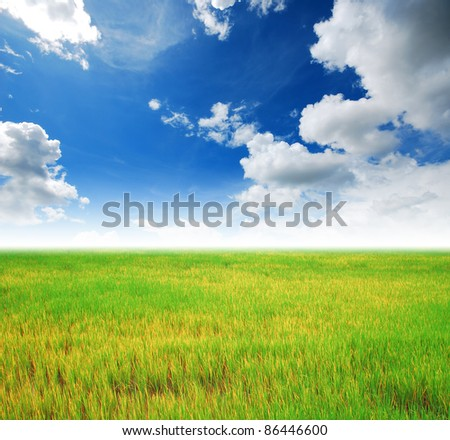 Rice field green grass blue sky cloud cloudy landscape background yellow