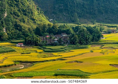 Rice field in Cao Bang province, Vietnam