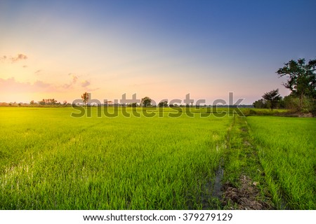 Rice Field in north of Thailand, Soft focus, Evening tone.