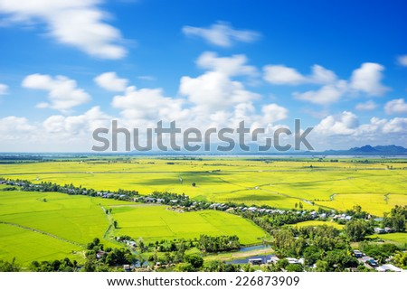 Rice Field in the morning in An Giang, Mekong Delta, southern Vietnam. An Giang province is where most rice producing Vietnam. - stock photo
