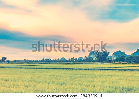 Rice field, mountain and sky with clouds background. Retro vintage filter effect.