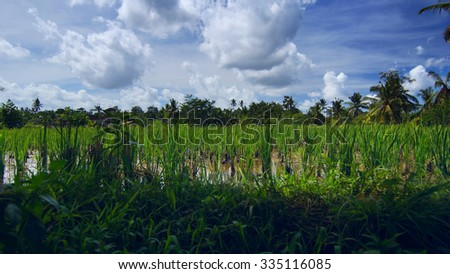 Rice field near the town Ubud in Bali - stock photo