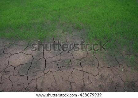 rice field no water ,environment hot season - stock photo