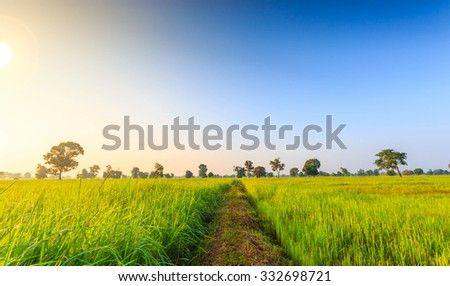 Rice Field of Farmer and sun in the morning,in Thailand - stock photo