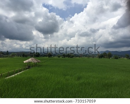 Rice field #onefineday