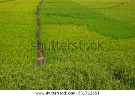 Rice field step on Mountain before sunset