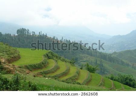 Rice field terrace - stock photo