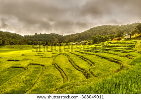 Rice field terrace as strom coming in the north of Thailand