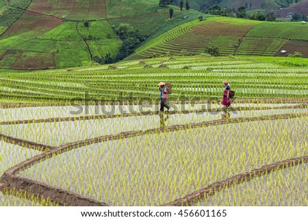 Rice Field Terrace with Farmer, at Chang Mai, THAILAND - JULY 18 , 2014: The farmers grow the rice at the terrace on moutain. - stock photo