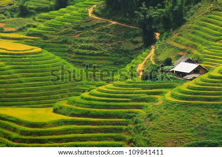 Rice field terraces at Sapa - stock photo