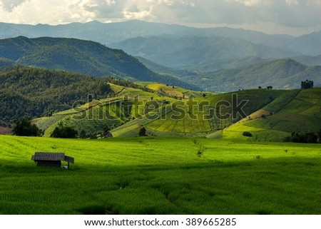 Rice field terraces in Thailand - stock photo