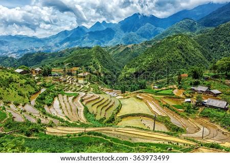 Rice field terraces (rice paddy fields). Near Cat Cat village - popular tourist trekking destination. Near Sapa, Vietnam - stock photo