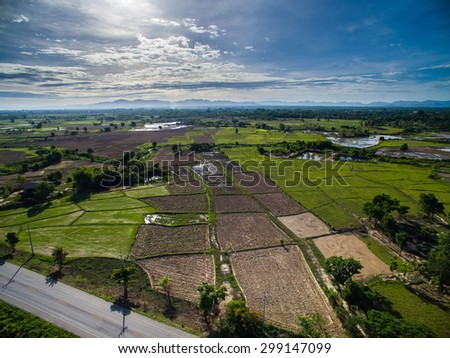 Rice field top view from drone Lampang, northern Thailand.