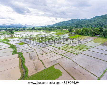 Rice field view after rainy