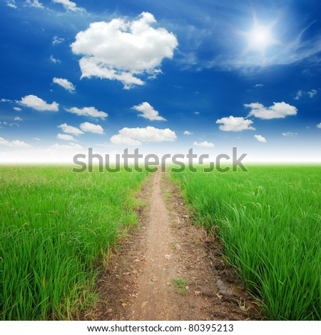 Rice field way on the green field background - stock photo