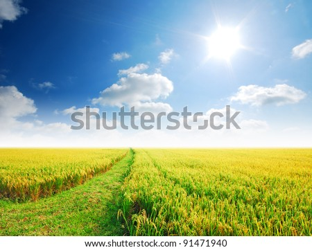 Rice field way on the green field background cloud cloudy - stock photo