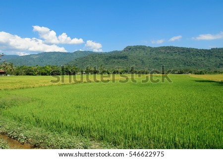 rice field with clearly sky in upcountry in thailand