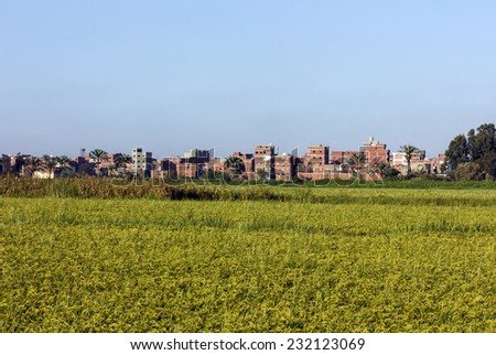 Rice field with houses in background,Damietta,north Egypt - stock photo