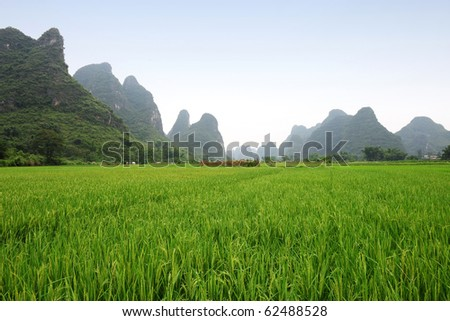 Rice field with karst scenery - stock photo