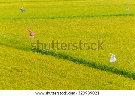 rice field with scarecrow in Yunlin