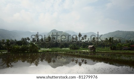 Rice field with water and buildings near mountains - stock photo