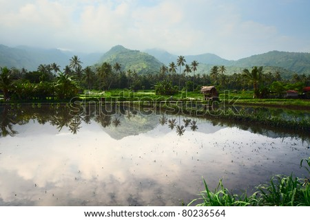 Rice field with water, wooden buildings and mountains on a horizon. Bali. Indonesia