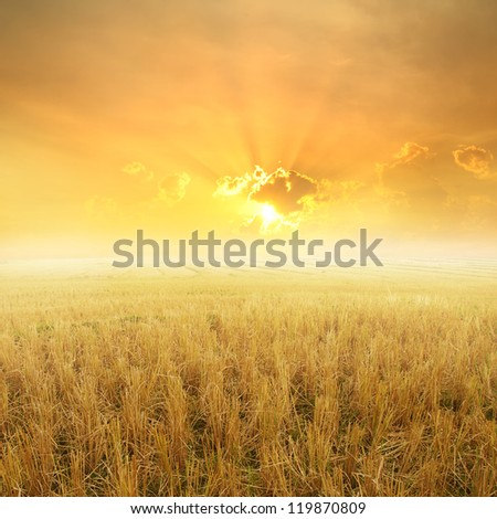 Rice fields after harvest and Sunset for background - stock photo
