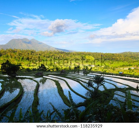 Rice fields and mountains on the horizon at sunny day. Bali. Indonesia - stock photo