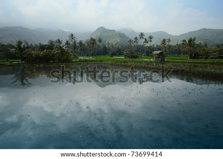 Rice fields filled with water and mountains on a horizon - stock photo