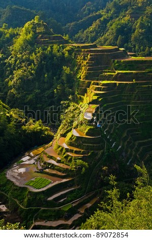 Rice fields in Philippines