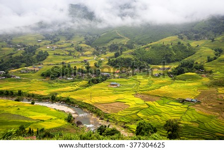 Rice fields on terraced in rainny season at SAPA, Lao Cai, Vietnam. Rice fields prepare for transplant at Northwest Vietnam Image ID:292113419
