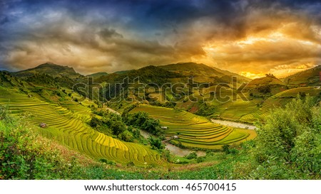Rice fields on terraced in sunset at Mu chang chai, Yen bai, Vietnam. Rice fields prepare the harvest at Northwest Vietnam