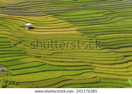 Rice fields on terraced (northern Vietnam) - stock photo