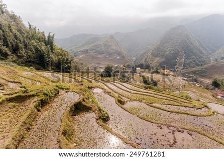 Rice fields on terraced of  Cat Cat Village, Sapa Vietnam. - stock photo