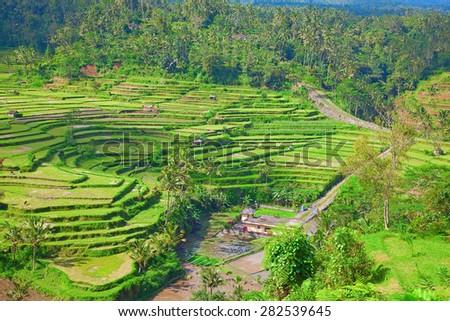 Rice fields, prepared for rice. Bali, Indonesia - stock photo