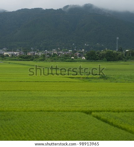 Rice fields with the Hira mountain's in the background.