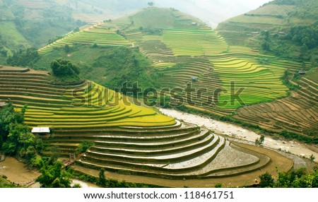 Rice filed of terraces , Yen bai, viet nam