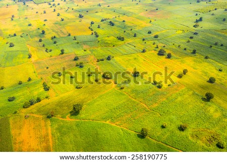 Rice filed seen from above, Thailand - stock photo