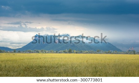 rice filed with mountain in background - stock photo