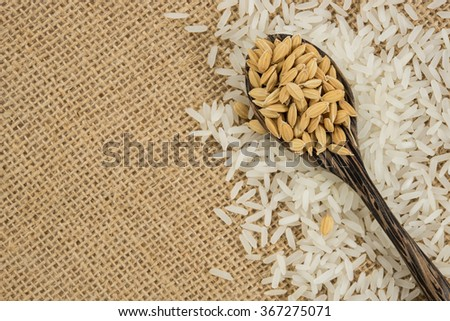 Rice grain - stock photo