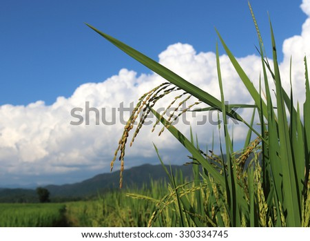 Rice grains and blue sky with clouds background - stock photo