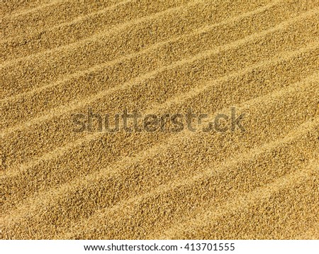 Rice grains drying in the sun in Nepal - stock photo