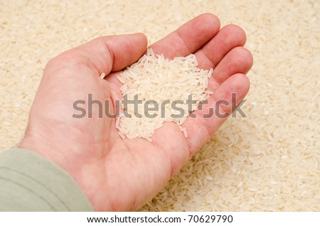 rice in hand - stock photo